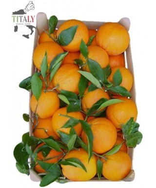 ORANGES OF RIBERA FROM SICILY