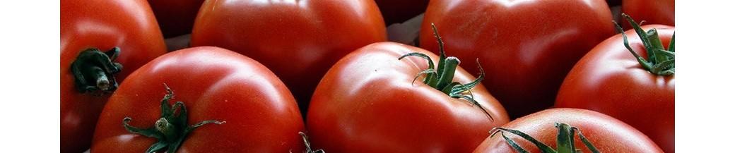 Tomaten-Tomatensauce